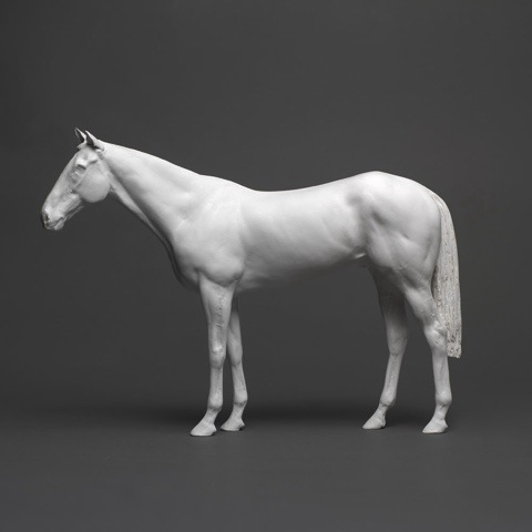 Black And White Horse Standing